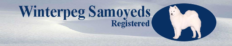 Winterpeg Samoyeds